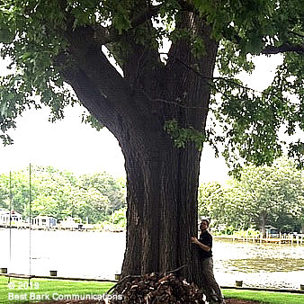 Tyler Balderson - Tree Hugger Expert
